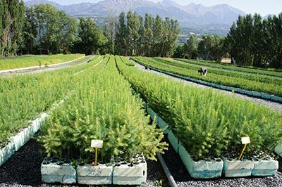 Reforestation work for Coletto du Fraisse