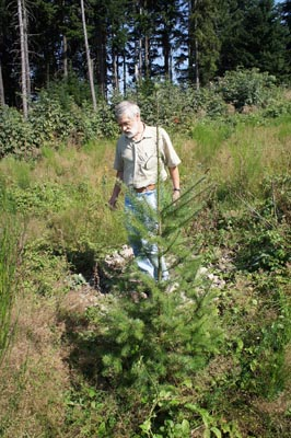 Coforêt site in Ronno (69).  Douglas-fir (Pseudotsuga douglasii) HIGH PERFORMANCE® mycorrhizal with Laccaria Bicolor S238N, plantation ROBIN ANTI CHIGNON® RODET R200 cm, aged one year height 15 cm and over, photo taken 2 years and a half after planting average height of plants 150 to 180 cm, recovery rate 99%, only one release was made