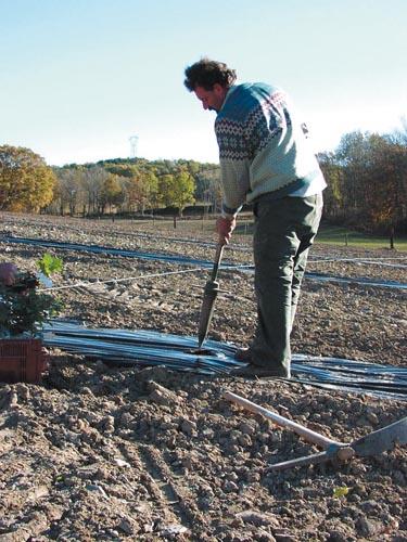 ROBIN planting planting