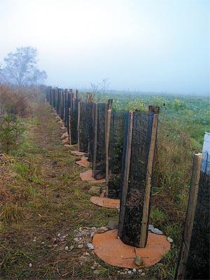 PLANT CHAMPIGNONS® with round cork mulch